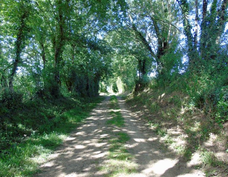 camping-le-moulin-des-effres-randonnee-pedestre-secondigny