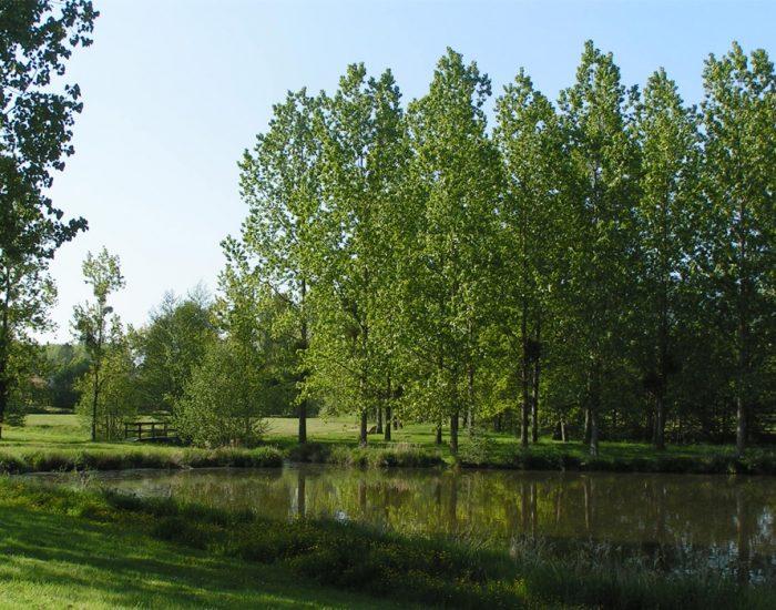 camping-le-moulin-des-effres-ballade-petit-pont-sur-lac-des-effres
