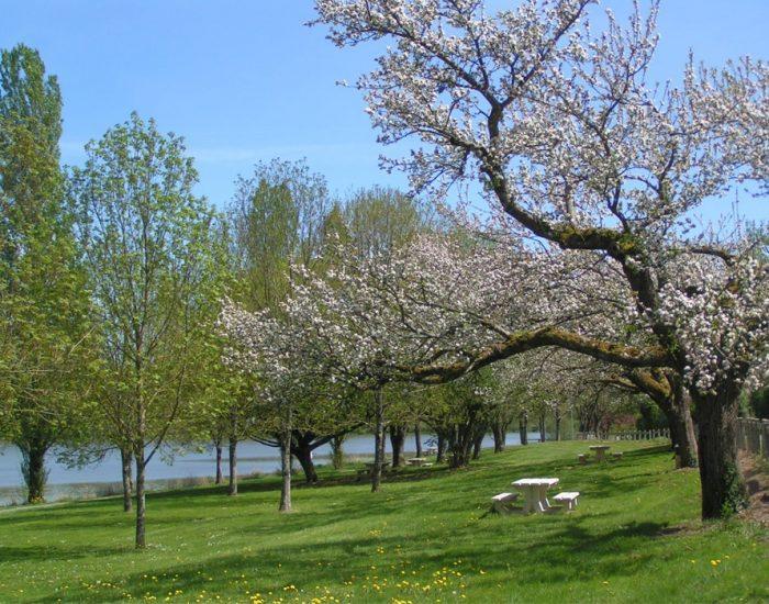 camping-le-moulin-des-effres-verdure-arbre-fleuri-pique-nique